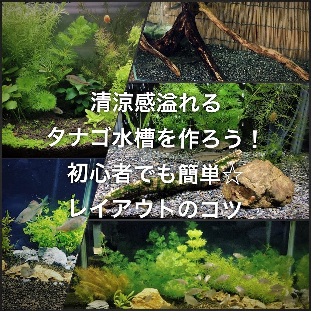 f:id:yumemiraitunagu:20200504161807j:plain