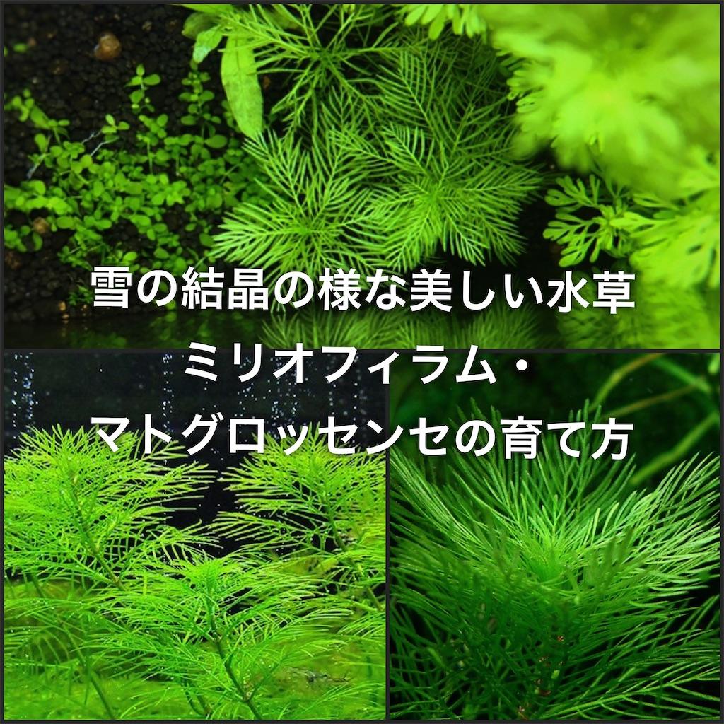 f:id:yumemiraitunagu:20200512040529j:plain