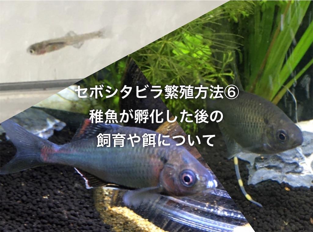 f:id:yumemiraitunagu:20200514025506j:plain