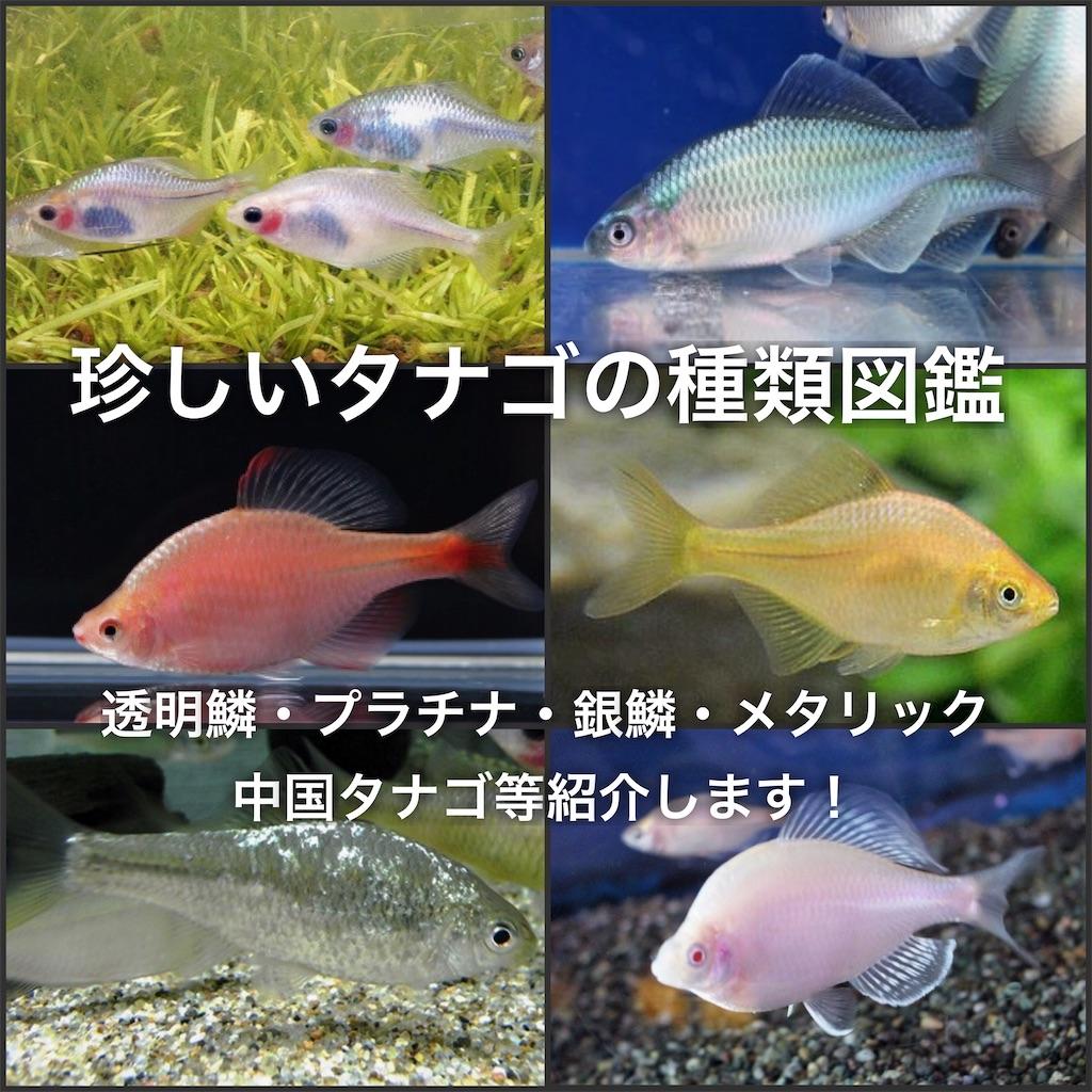 f:id:yumemiraitunagu:20200519023705j:plain