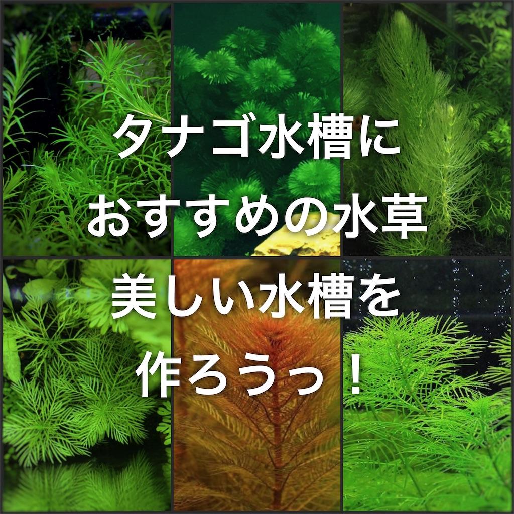f:id:yumemiraitunagu:20200524105807j:plain
