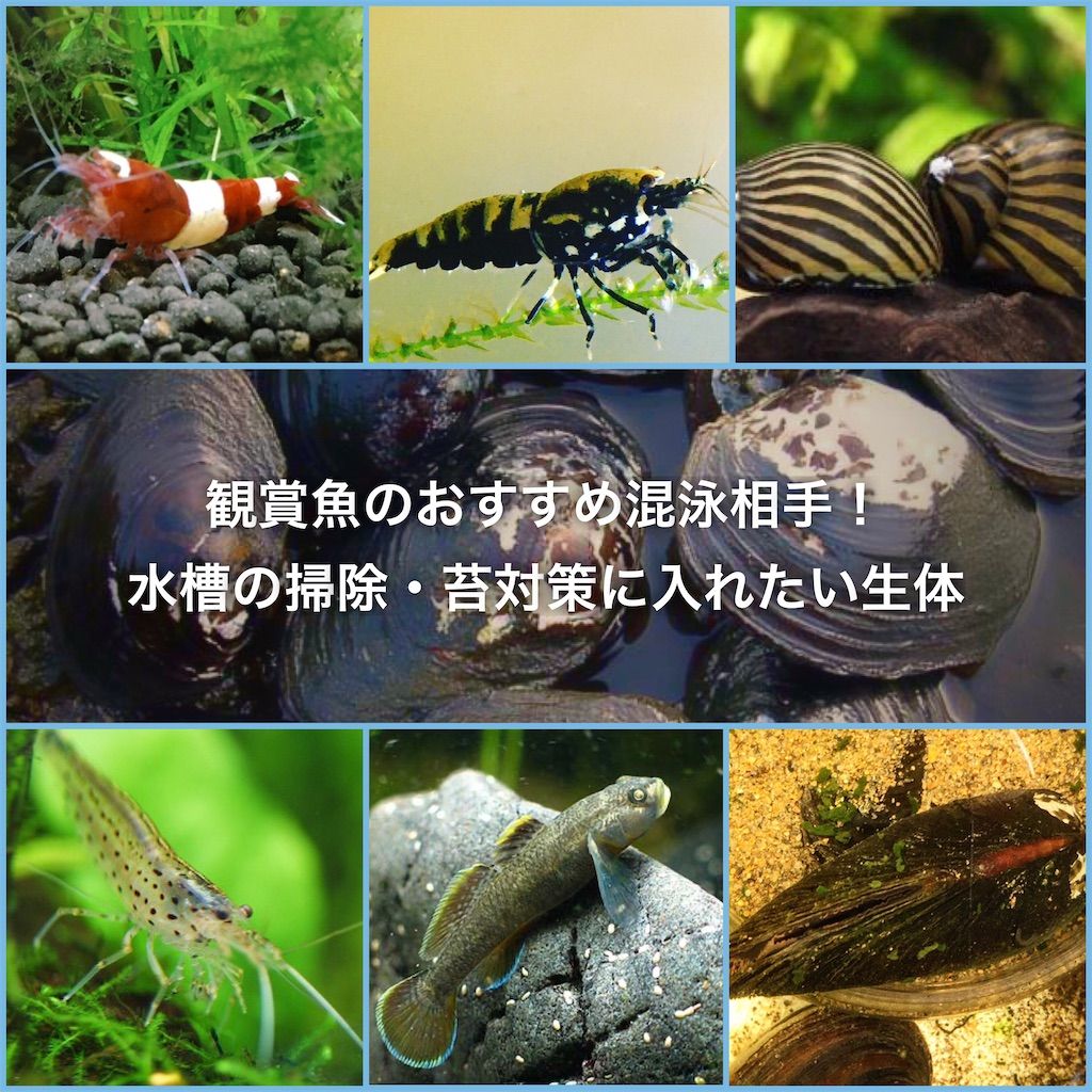 f:id:yumemiraitunagu:20200525043427j:plain
