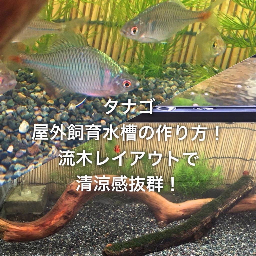f:id:yumemiraitunagu:20200531044010j:plain