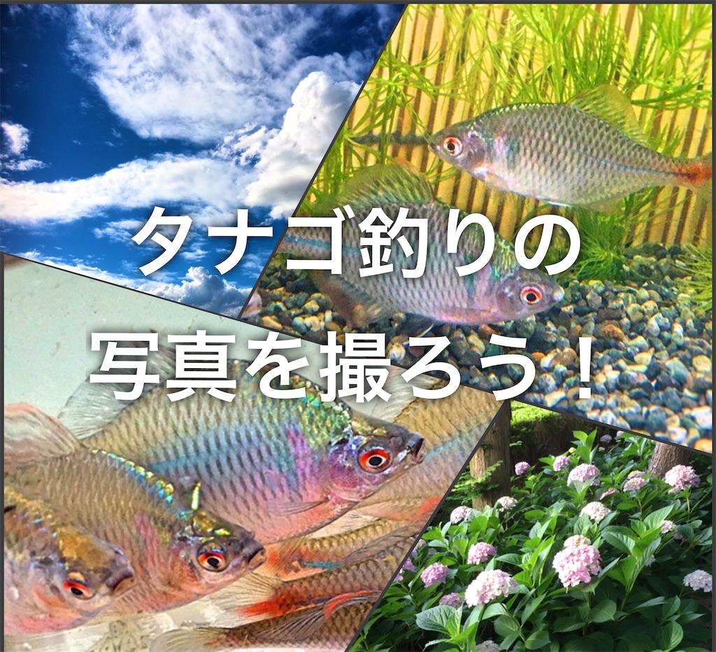 f:id:yumemiraitunagu:20200602063326j:plain