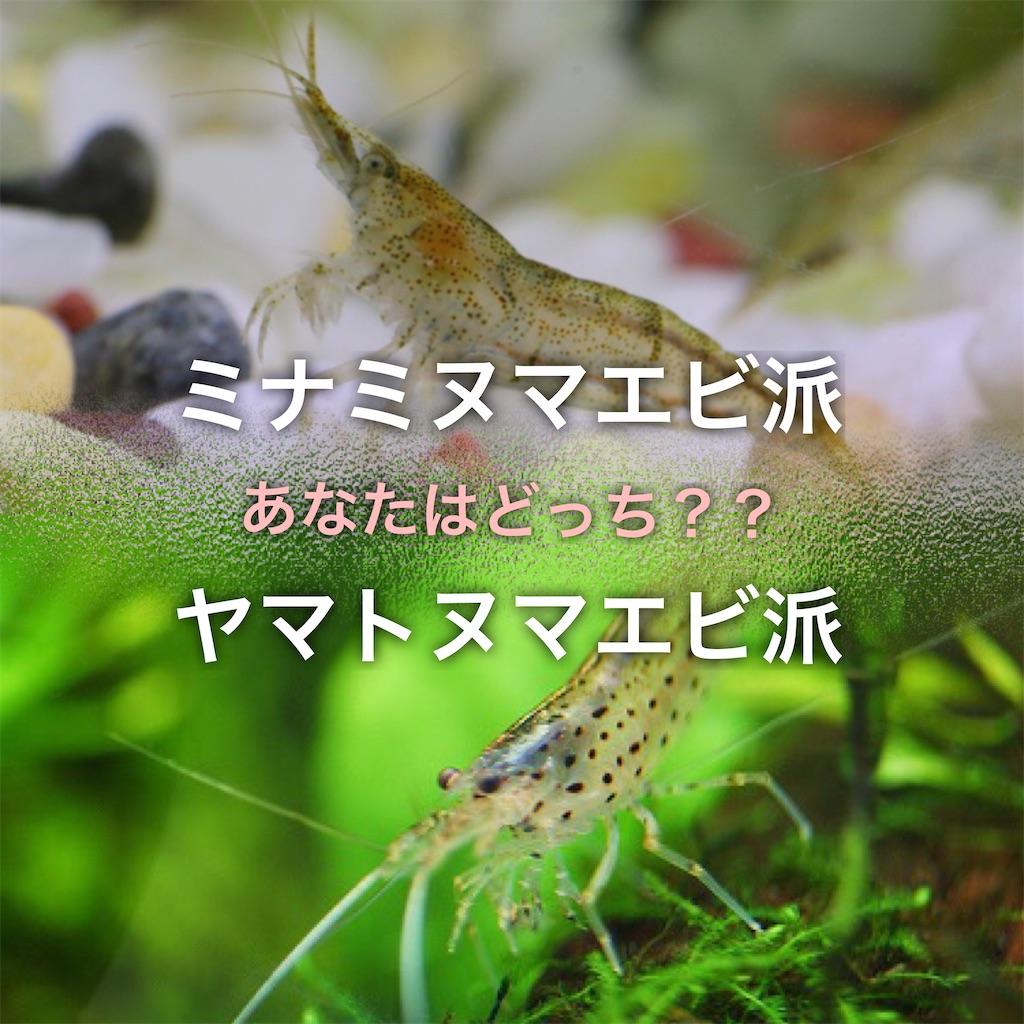 f:id:yumemiraitunagu:20200604061904j:plain