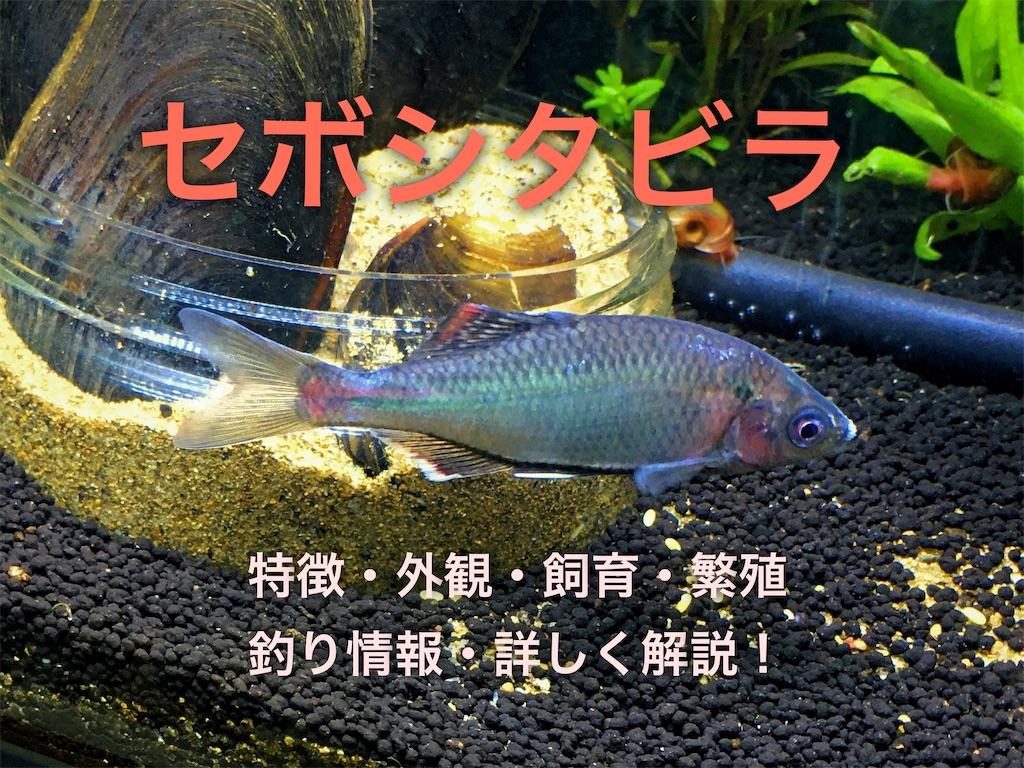f:id:yumemiraitunagu:20200707044258j:plain