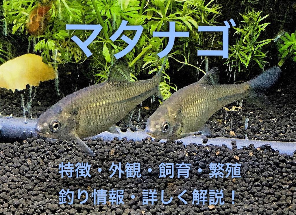 f:id:yumemiraitunagu:20200708031553j:plain