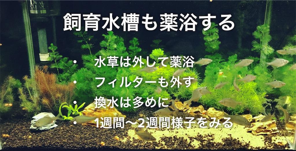 f:id:yumemiraitunagu:20200817150633j:plain