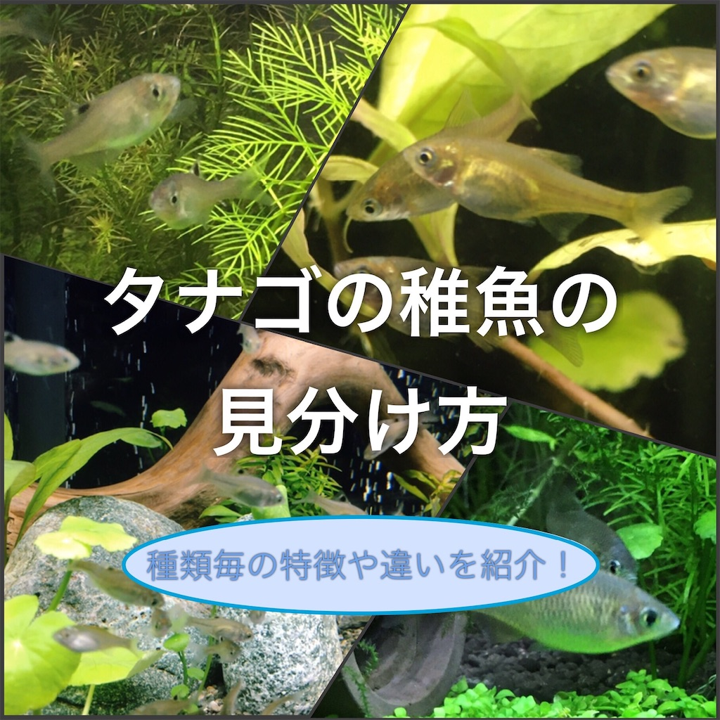 f:id:yumemiraitunagu:20200824135400j:plain