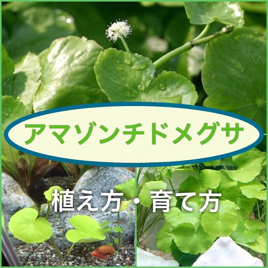 f:id:yumemiraitunagu:20200825103732j:plain
