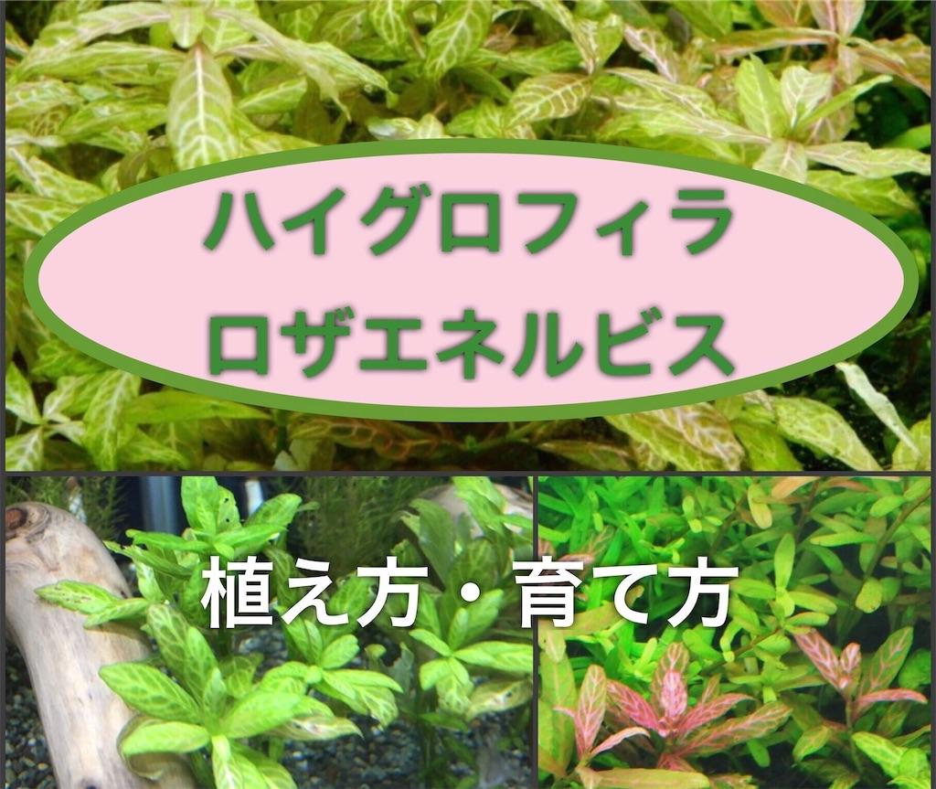 f:id:yumemiraitunagu:20200826190713j:plain