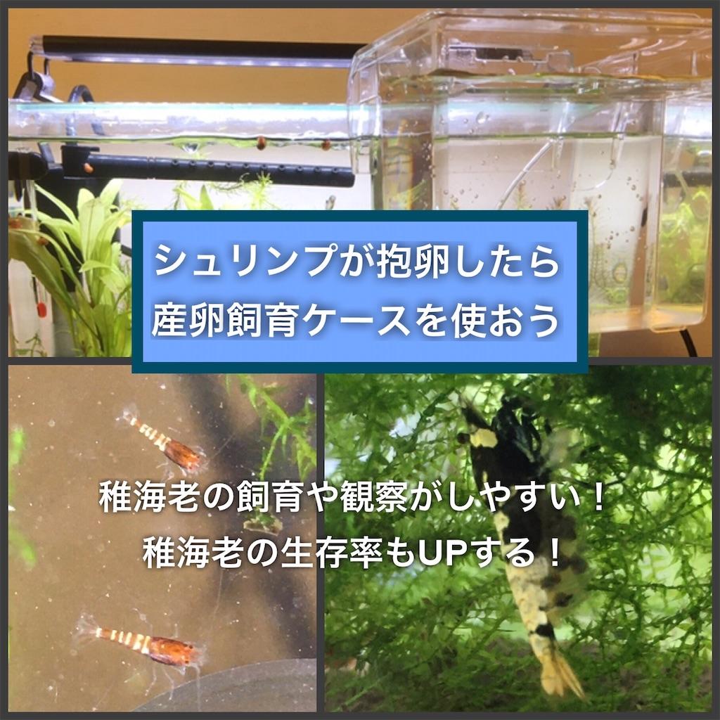 f:id:yumemiraitunagu:20200828134107j:plain