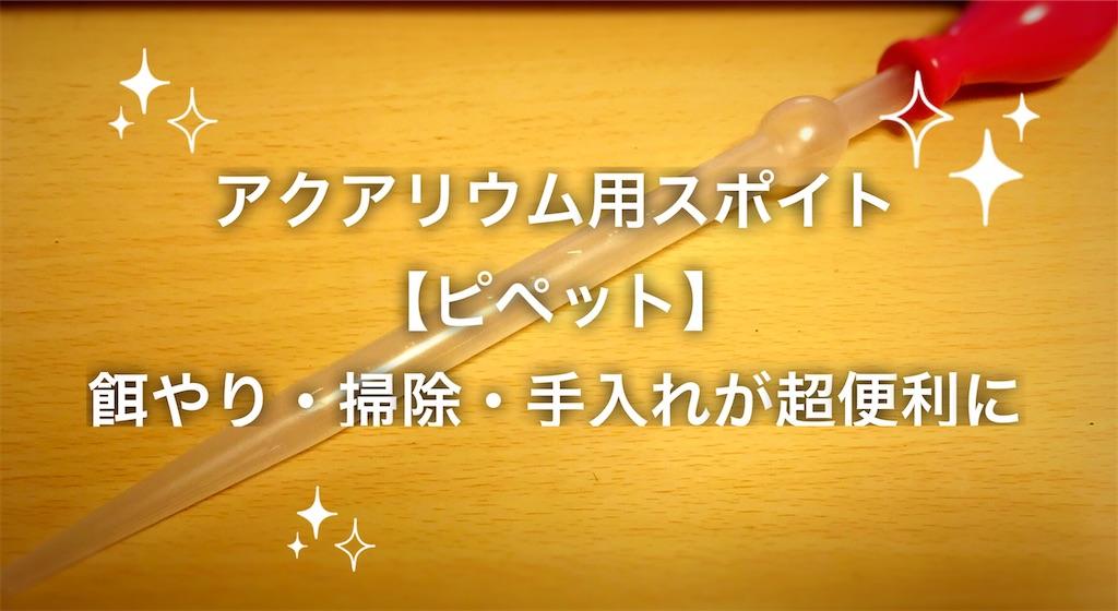 f:id:yumemiraitunagu:20200831001803j:plain