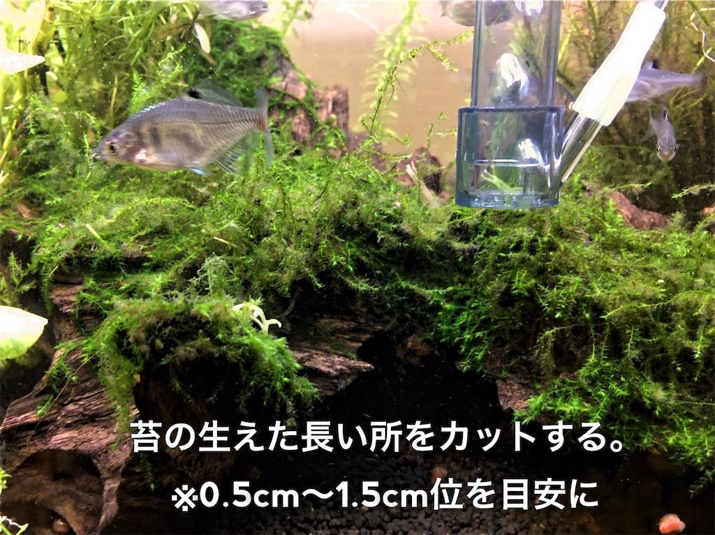 f:id:yumemiraitunagu:20200831111524j:plain