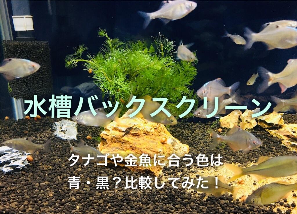 f:id:yumemiraitunagu:20200831161750j:plain