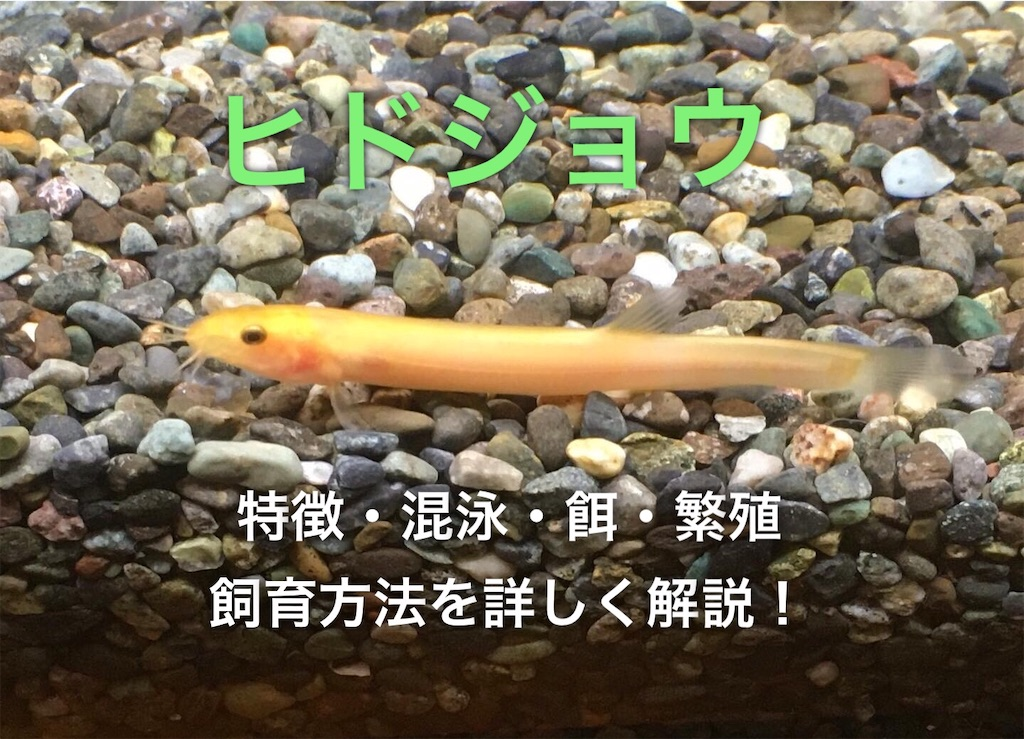 f:id:yumemiraitunagu:20200901081828j:plain