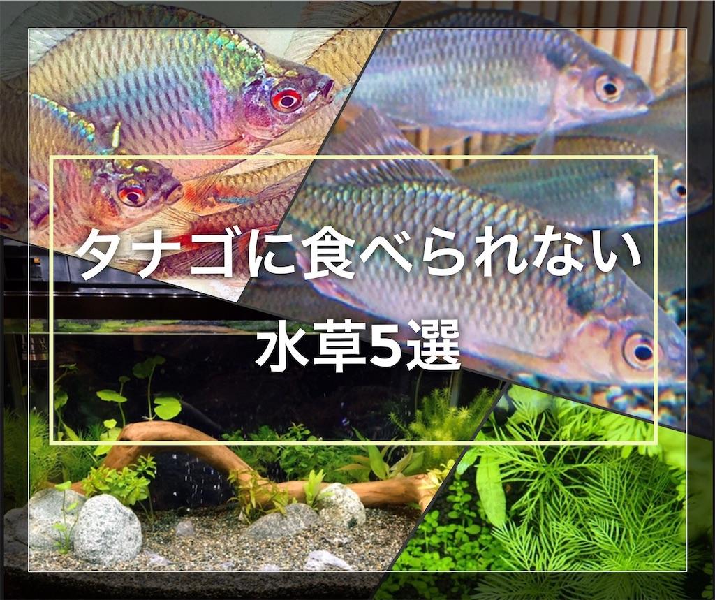 f:id:yumemiraitunagu:20200902172302j:plain