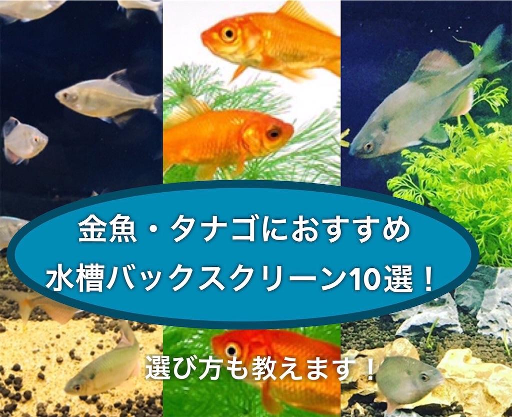 f:id:yumemiraitunagu:20200904034002j:plain