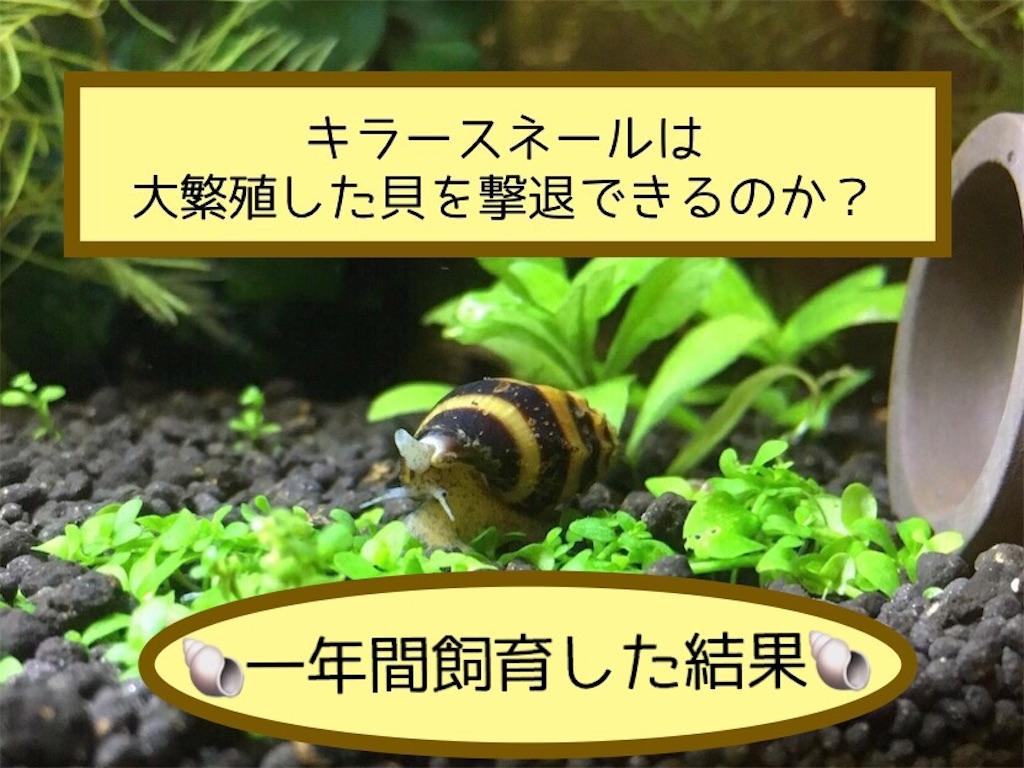 f:id:yumemiraitunagu:20200904092730j:plain