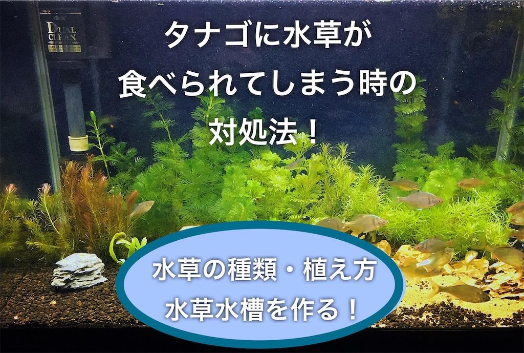 f:id:yumemiraitunagu:20200907054407j:plain