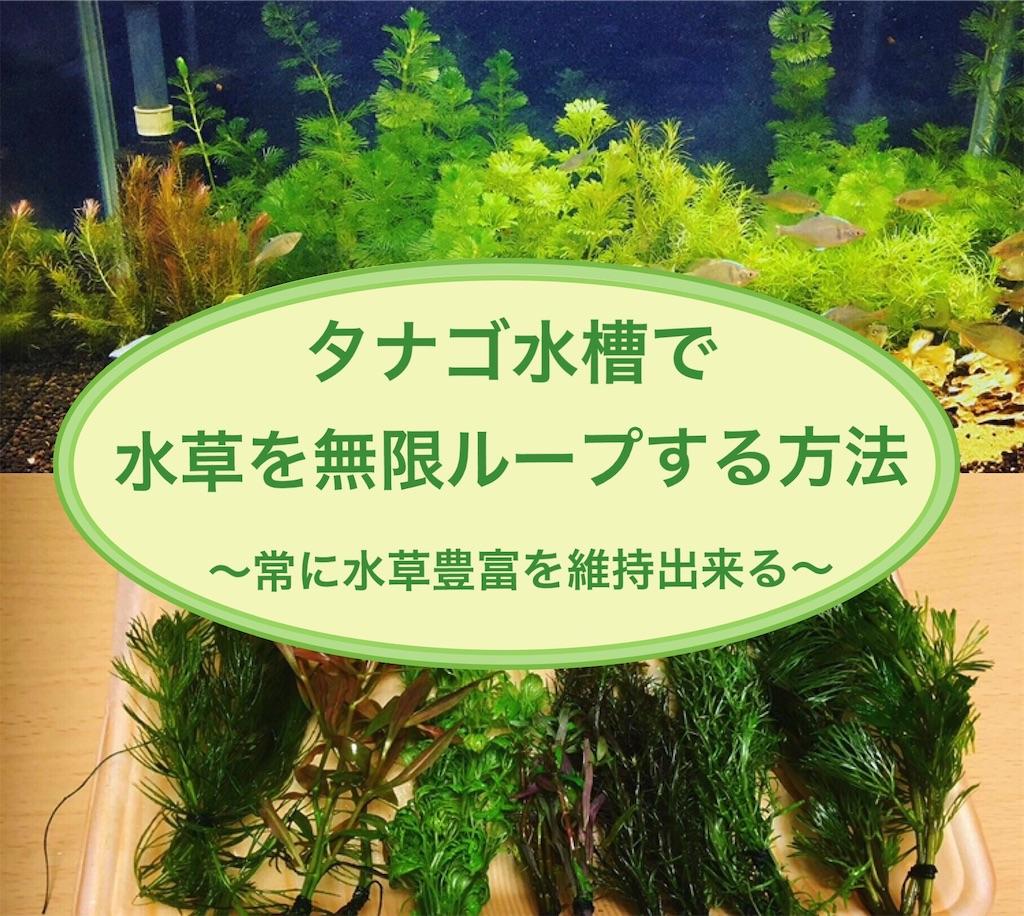 f:id:yumemiraitunagu:20200909011738j:plain