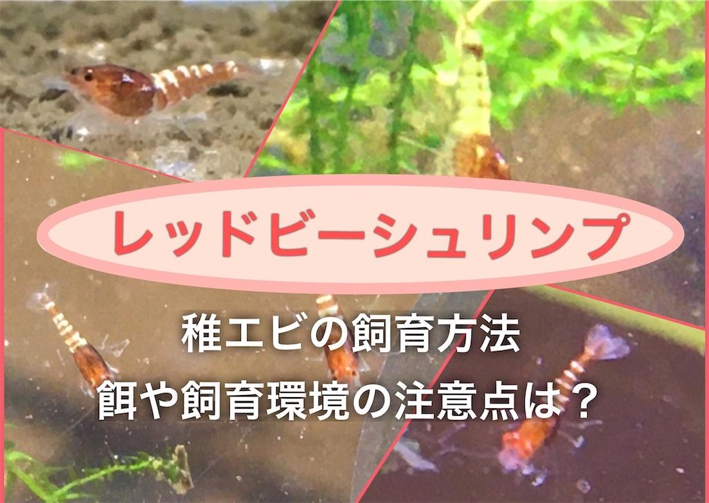 f:id:yumemiraitunagu:20200911082621j:plain