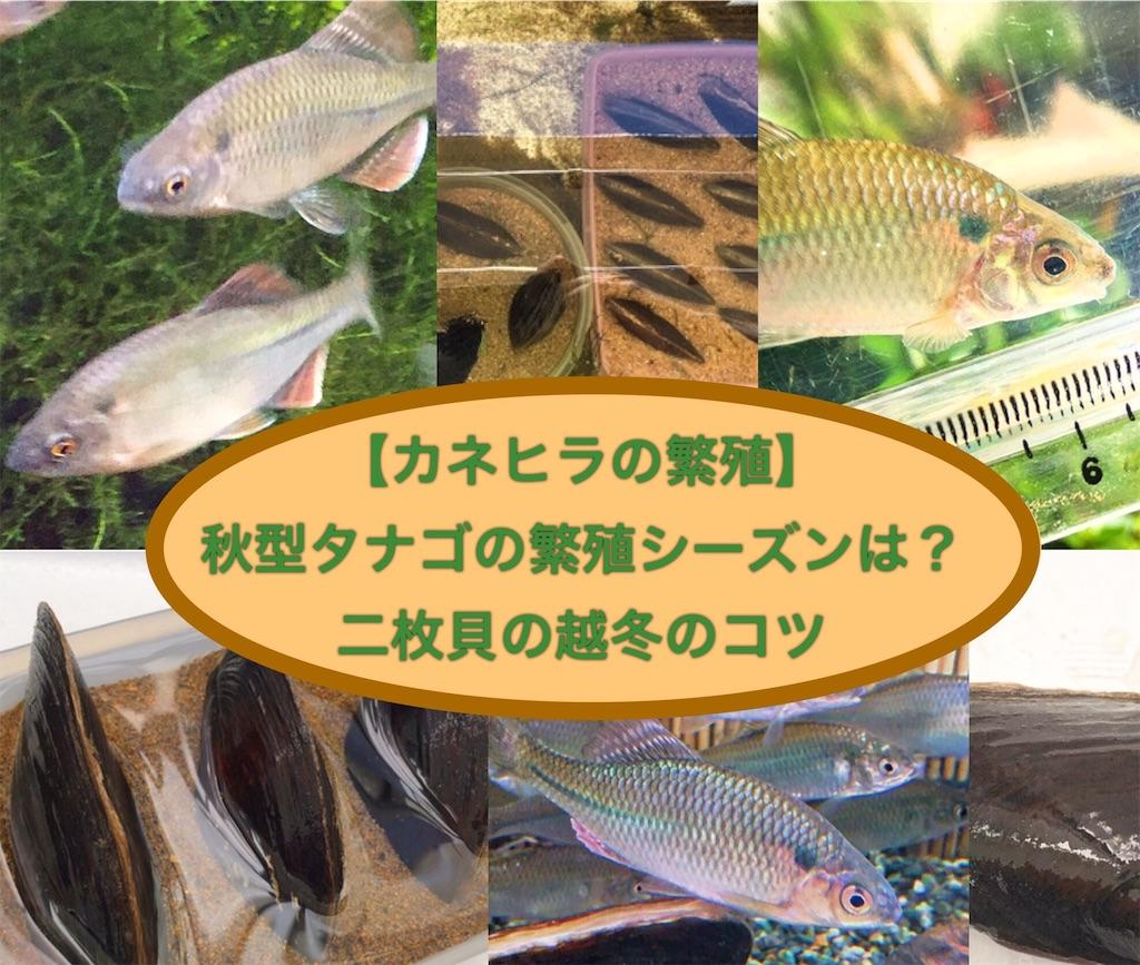 f:id:yumemiraitunagu:20200914110858j:plain