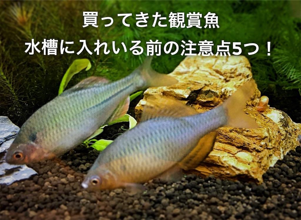 f:id:yumemiraitunagu:20200914225112j:plain