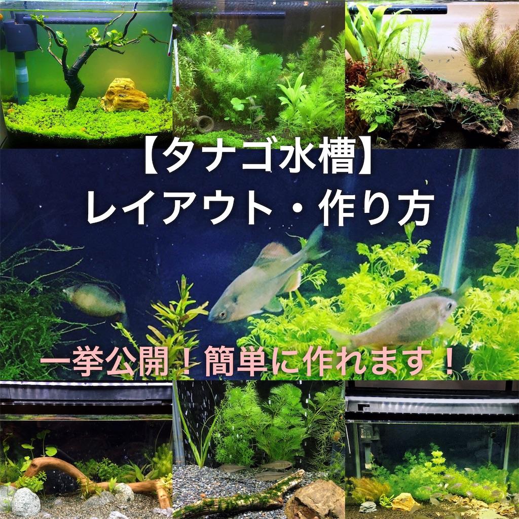 f:id:yumemiraitunagu:20200916051411j:plain