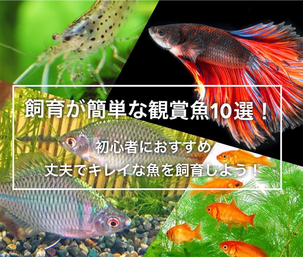 f:id:yumemiraitunagu:20200921104908j:plain