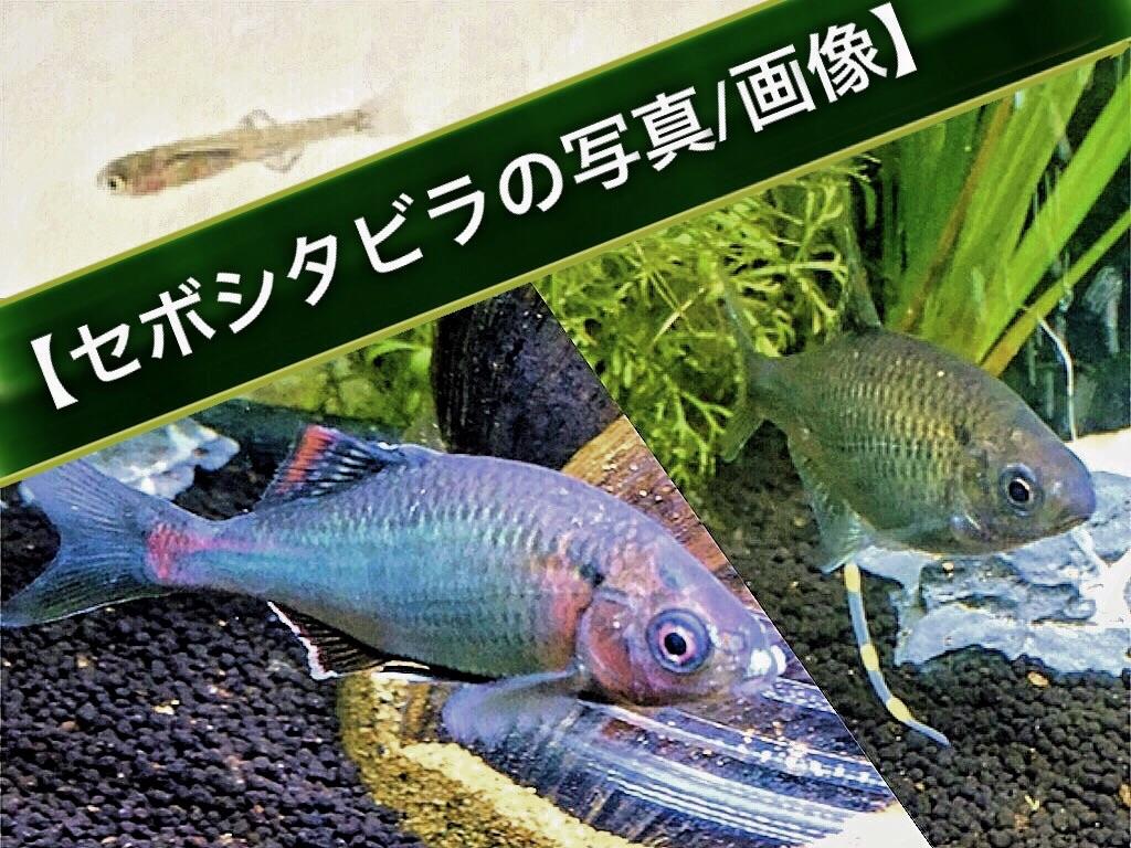 f:id:yumemiraitunagu:20200925111307j:plain