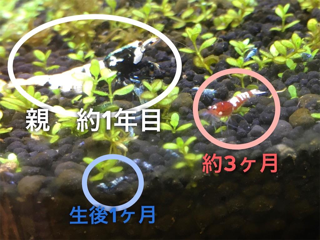 f:id:yumemiraitunagu:20200925135446j:plain