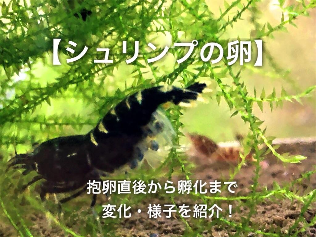 f:id:yumemiraitunagu:20200925174634j:plain