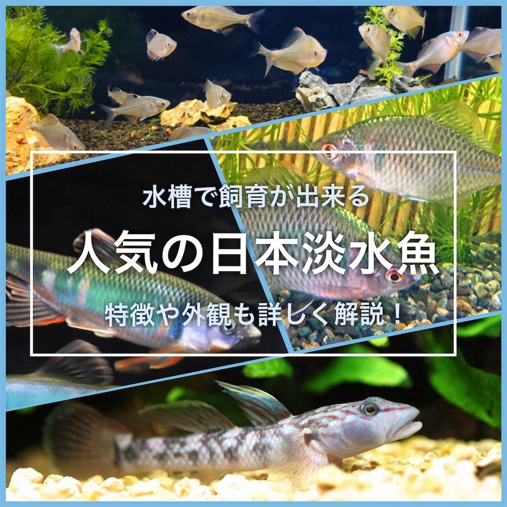 f:id:yumemiraitunagu:20200926115922j:plain