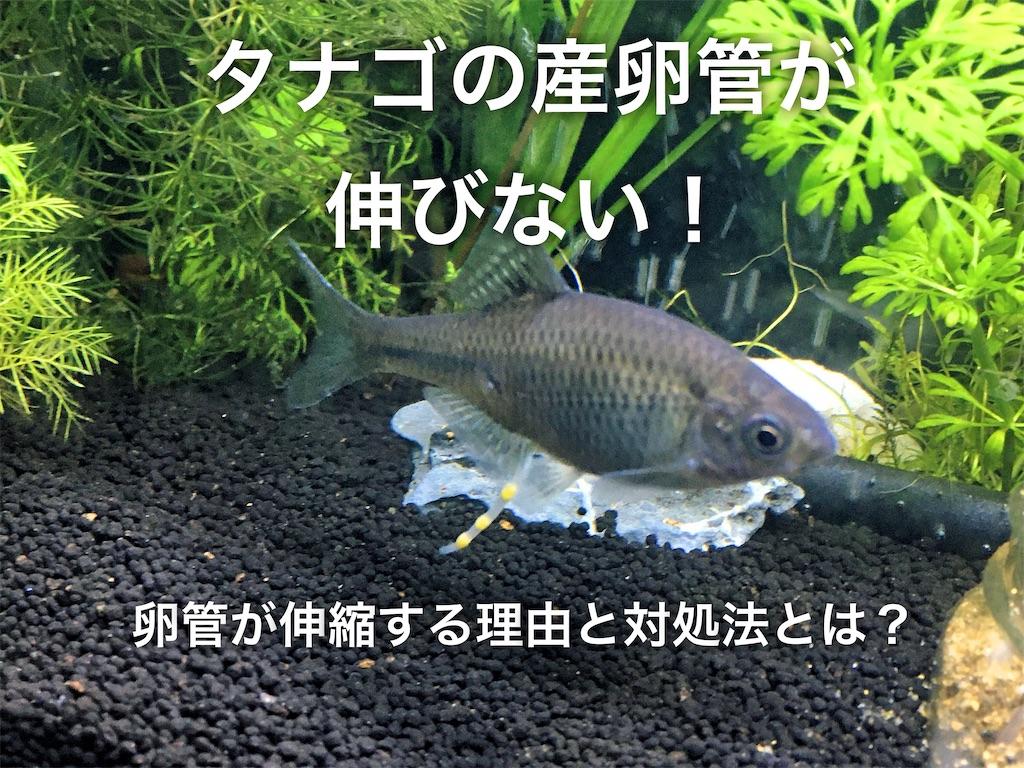 f:id:yumemiraitunagu:20200929105925j:plain