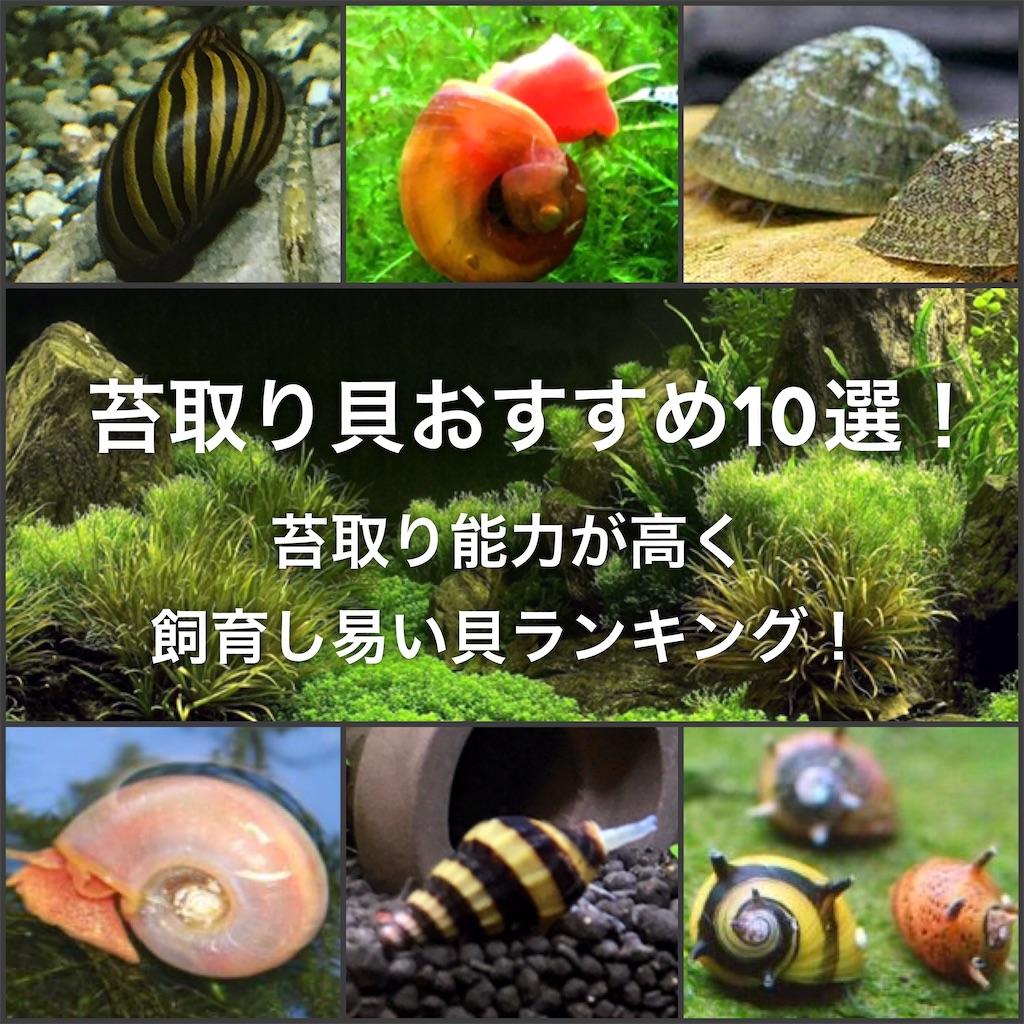 f:id:yumemiraitunagu:20201005224154j:plain