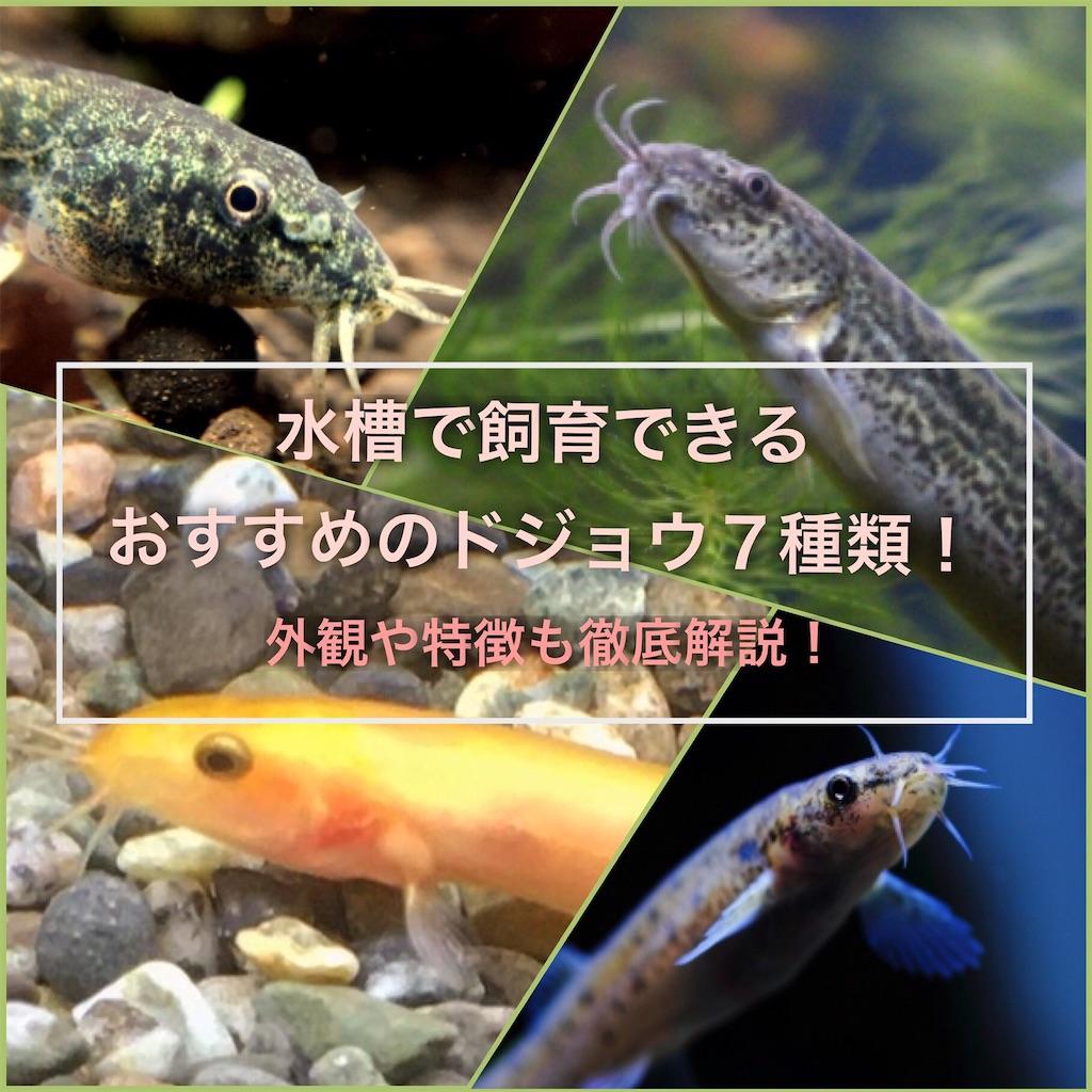 f:id:yumemiraitunagu:20201006153419j:plain