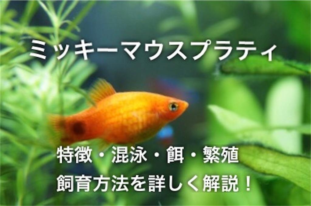f:id:yumemiraitunagu:20201011062350j:plain