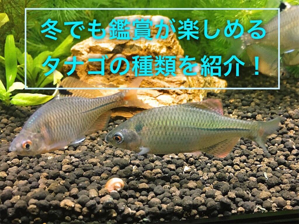 f:id:yumemiraitunagu:20201016104509j:plain