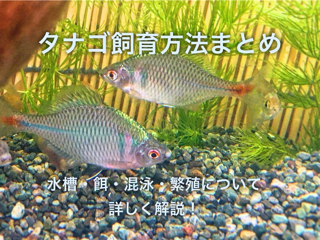f:id:yumemiraitunagu:20201213090026j:plain