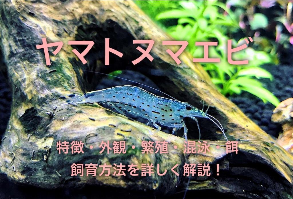 f:id:yumemiraitunagu:20201219003753j:plain