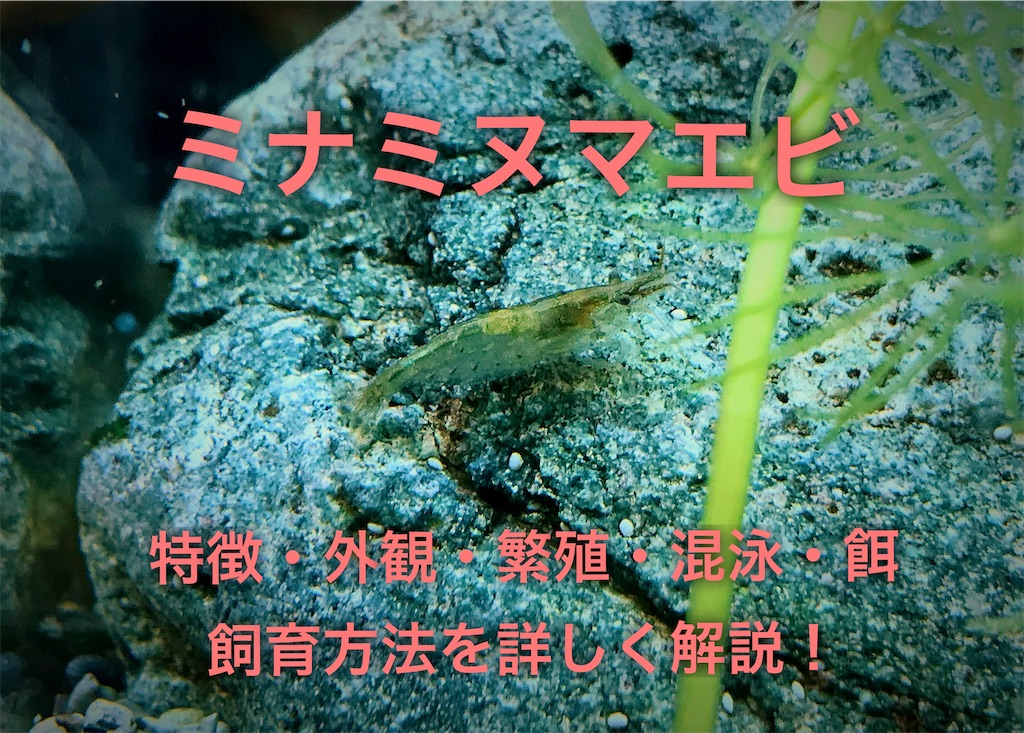 f:id:yumemiraitunagu:20201219115601j:plain