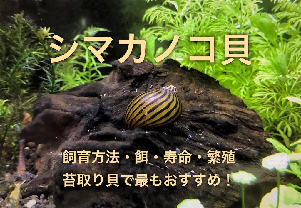 f:id:yumemiraitunagu:20201231025307j:plain
