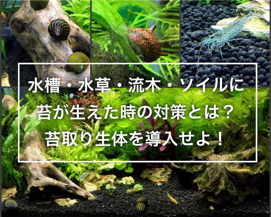 f:id:yumemiraitunagu:20210102090907j:plain