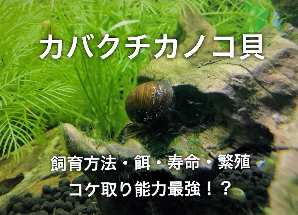 f:id:yumemiraitunagu:20210103163327j:plain