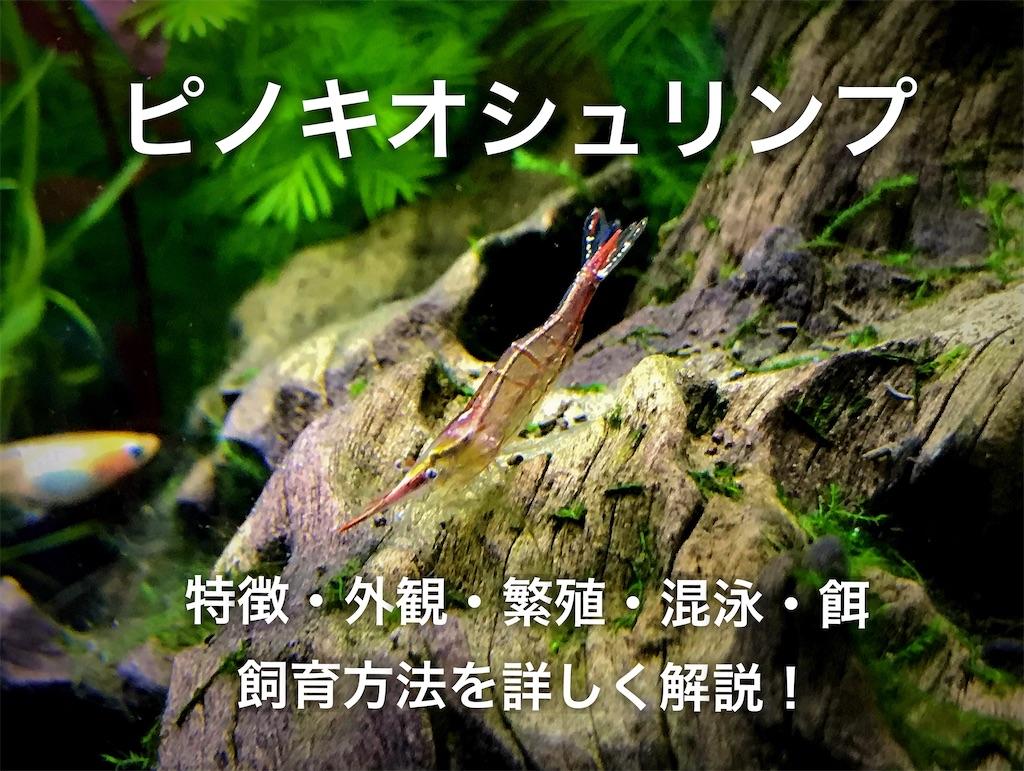 f:id:yumemiraitunagu:20210105030434j:plain