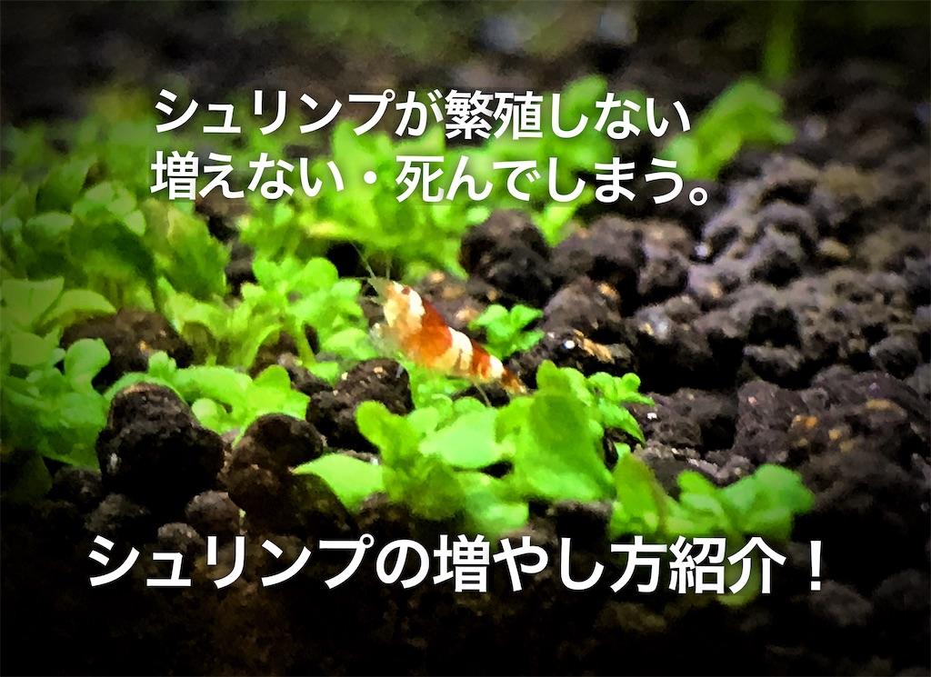 f:id:yumemiraitunagu:20210109224004j:plain