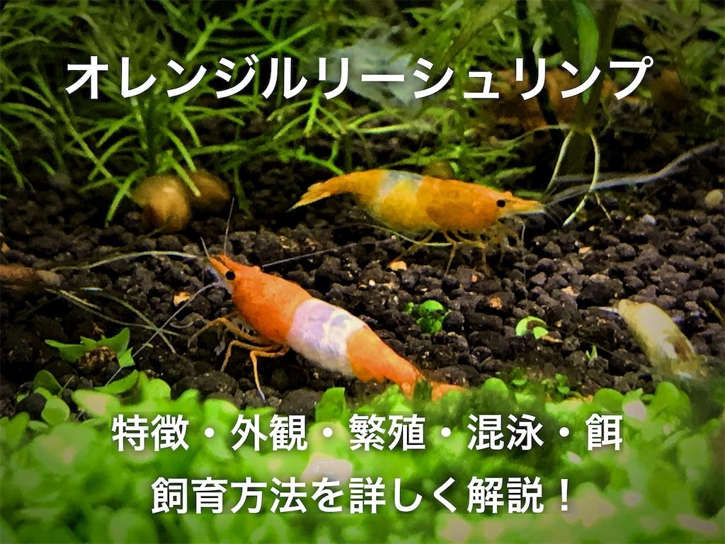 f:id:yumemiraitunagu:20210110125007j:plain