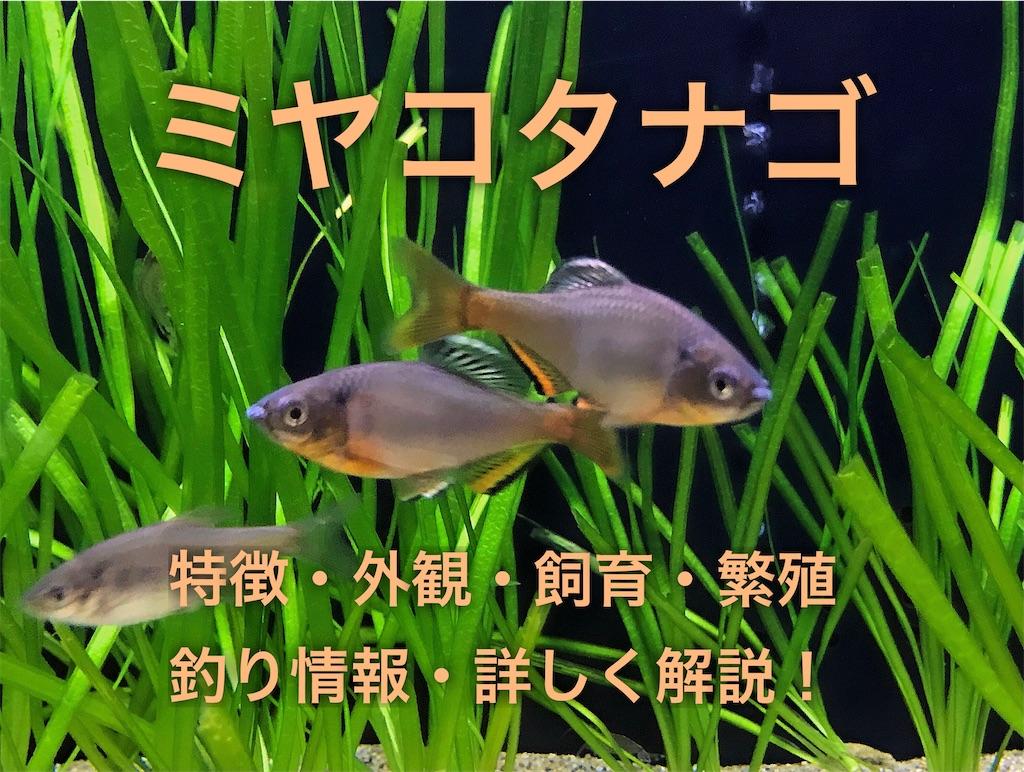 f:id:yumemiraitunagu:20210112153801j:plain