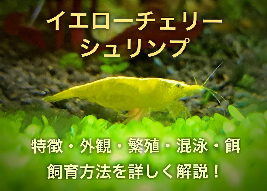 f:id:yumemiraitunagu:20210113142131j:plain